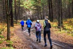 Una familia de los deportes en una mañana corre en el bosque después de la lluvia imagenes de archivo