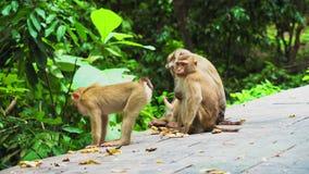 Una familia de monos en una selva tropical el hábitat natural de monos almacen de video