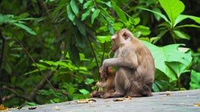 Una familia de monos, una mamá con una sentada del bebé vive en un parque en un hábitat natural coma los plátanos y las nueces almacen de metraje de vídeo