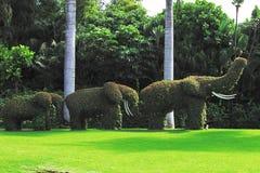 Una familia divertida de los elefantes en un paseo landscaping Las esculturas se hacen de plantas imagenes de archivo