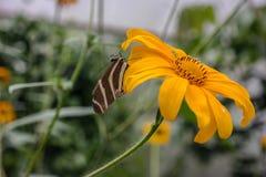 Una farfalla Immagini Stock Libere da Diritti