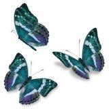 Una farfalla di tre blu Fotografia Stock