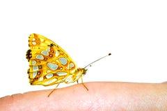 Una farfalla domata sul dito femminile Fotografie Stock Libere da Diritti