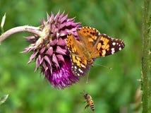 Una farfalla e un'ape su un fiore Fotografia Stock Libera da Diritti