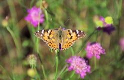 Una farfalla semplice Fotografie Stock