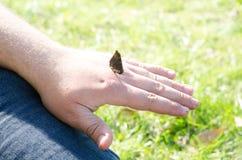 Una farfalla si siede sulla mano di un uomo o di un uomo adulto su fondo della natura verde immagine stock libera da diritti