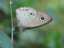 una farfalla su una foglia verde immagini stock