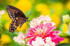 Una farfalla su un fiore immagine stock