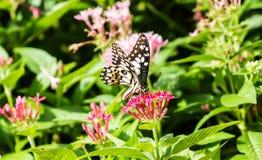 Una farfalla sul fiore Immagine Stock Libera da Diritti