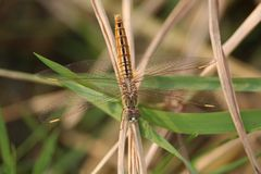 Una farfalla sulla foglia di erba immagine stock