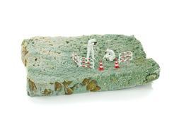 Una fetta di pane ammuffito Fotografia Stock Libera da Diritti