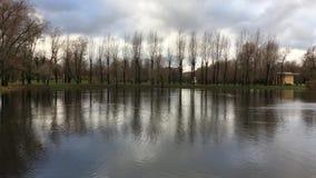 Una fila de árboles reflejó en una charca en el parque almacen de metraje de vídeo