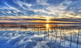 Una fila de cañas en el lago Imagen de archivo