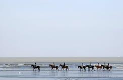 Una fila de caballos a lo largo del mar Imagen de archivo libre de regalías