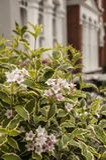 Una fila de casas en Lodnon con algunas flores en el primero plano Imagen de archivo libre de regalías