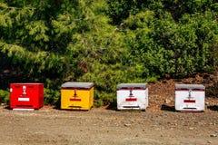 Una fila de la abeja colorida de madera encorcha en verano Imagenes de archivo