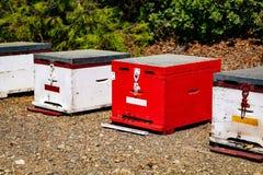 Una fila de la abeja colorida de madera encorcha en verano Foto de archivo
