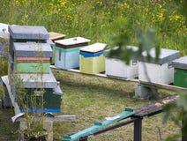 Una fila de la abeja encorcha en un campo Imagenes de archivo