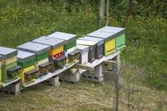 Una fila de la abeja encorcha en un campo Imagen de archivo libre de regalías