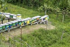 Una fila de la abeja encorcha en un campo Foto de archivo