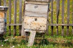 Una fila de la abeja encorcha en un campo El apicultor en el campo de flores Las colmenas en un colmenar con las abejas que vuela Imagen de archivo