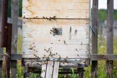 Una fila de la abeja encorcha en un campo El apicultor en el campo de flores Las colmenas en un colmenar con las abejas que vuela Fotografía de archivo libre de regalías