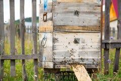 Una fila de la abeja encorcha en un campo El apicultor en el campo de flores Las colmenas en un colmenar con las abejas que vuela Foto de archivo
