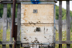 Una fila de la abeja encorcha en un campo El apicultor en el campo de flores Las colmenas en un colmenar con las abejas que vuela Fotos de archivo