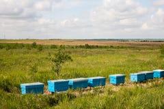 Una fila de la abeja encorcha en un campo de flores Imagen de archivo