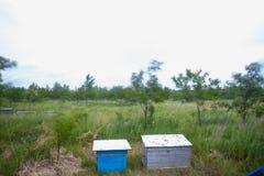 Una fila de la abeja encorcha en un campo de flores Imagen de archivo libre de regalías