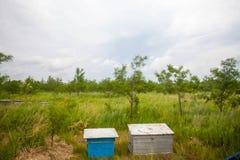 Una fila de la abeja encorcha en un campo de flores Fotos de archivo libres de regalías