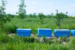 Una fila de la abeja encorcha en un campo de flores Foto de archivo libre de regalías