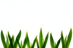 Una fila de la hierba verde Imágenes de archivo libres de regalías