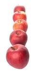 Una fila de manzanas rojas III Imagen de archivo libre de regalías