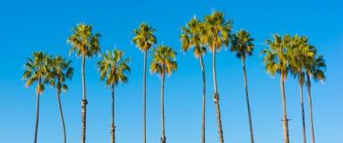 Una fila de palmeras con un fondo del azul de cielo Imagen de archivo libre de regalías