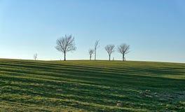 Una fila de pequeños árboles silueteados Imágenes de archivo libres de regalías