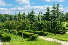 Una fila degli alberi Fotografia Stock