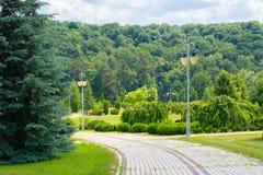 Una fila degli alberi Fotografia Stock Libera da Diritti