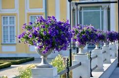 Una fila dei fiori nell'iarda del palazzo Immagine Stock