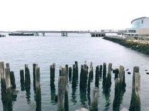 Una fila dei pali di legno dal lungomare di Portland immagini stock