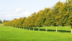 Una fila dell'insieme degli alberi in erba Fotografie Stock Libere da Diritti