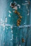 Una fila dell'vespe bagnate di secchezza Immagini Stock