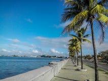 Una fila della palma, cocchi, ha allineato dal lato della strada, affrontante il mare, il Messico del sud Fotografia Stock