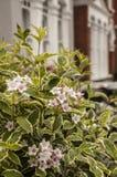 Una fila di case in Lodnon con alcuni fiori nella priorità alta Immagine Stock Libera da Diritti