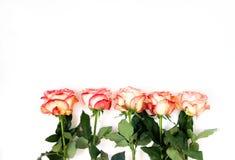 Una fila di cinque rose immagini stock