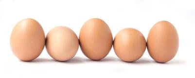 Una fila di cinque uova marroni del pollo Fotografia Stock Libera da Diritti
