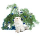 Una filiale con le sfere ed il gatto bianco del nuovo anno Fotografia Stock Libera da Diritti