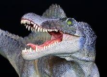 Una fine del dinosauro di Spinosaurus in su contro il nero Immagine Stock