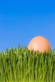 Una fine dettagliata in su di un uovo di Brown, Nestled nell'erba verde w Fotografia Stock