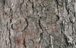 Una fine grigia della corteccia di albero su fotografia stock